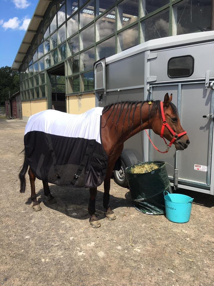 """Abschwitzdecke/Fliegendecke/Transportdecke """"Summers Best""""  speziell für schmale Pferde"""