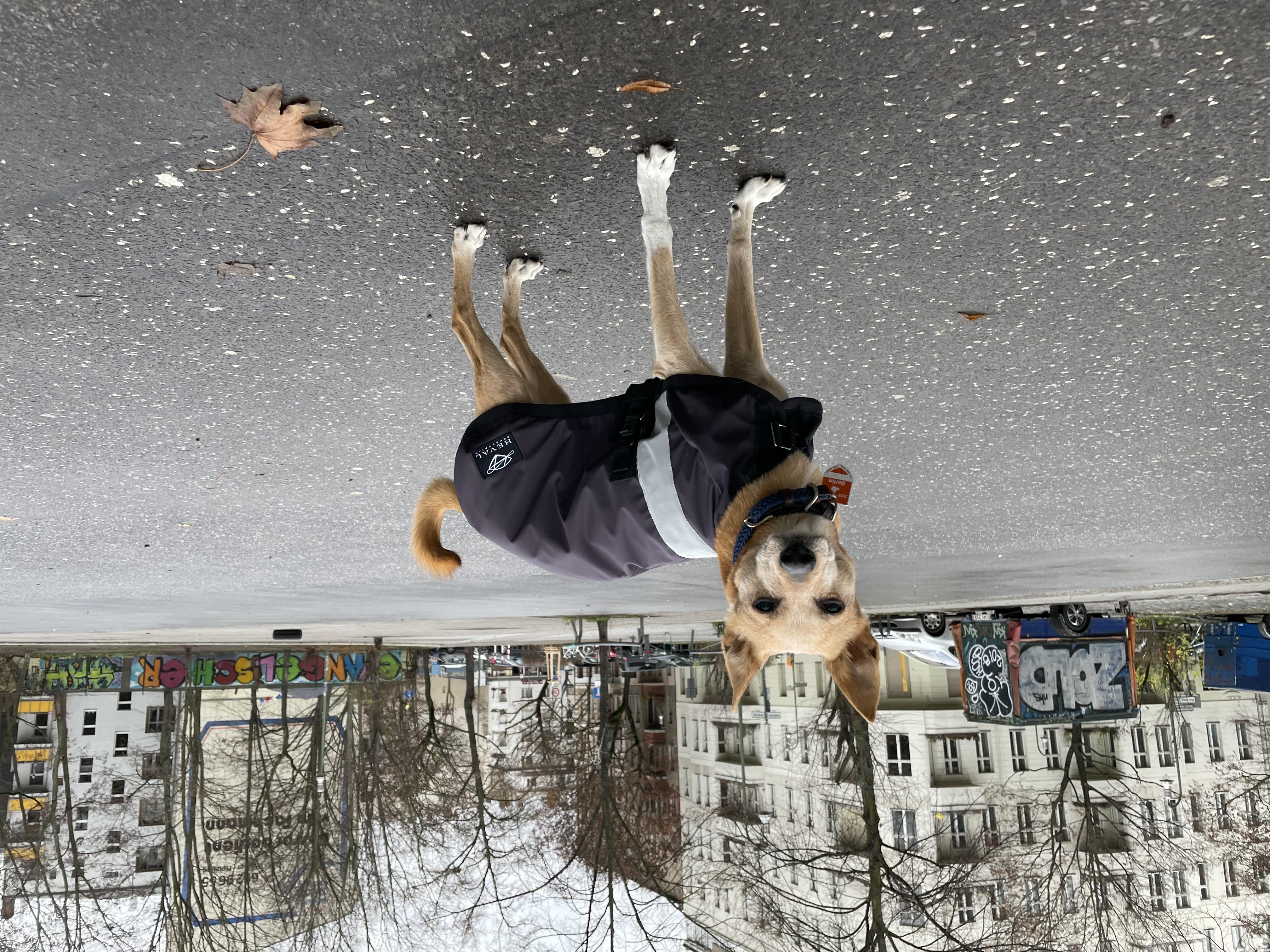 Hundedecke Stay Dry 100% wind- und wasserdicht